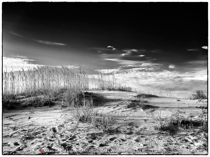Beach Dune, St. Augustine, Fl - Maxis Gamez, All Rights Reserved