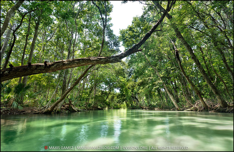 Weeki-Wachee River - 3 Images Blended Together, FL - Maxis Gamez, All Rights Reserved