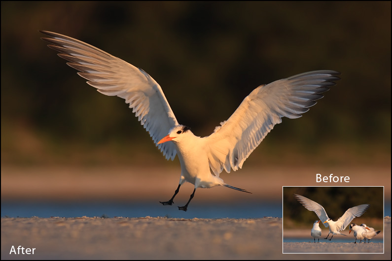 Affordable Bird Photography Workshop With Maxis Gamez
