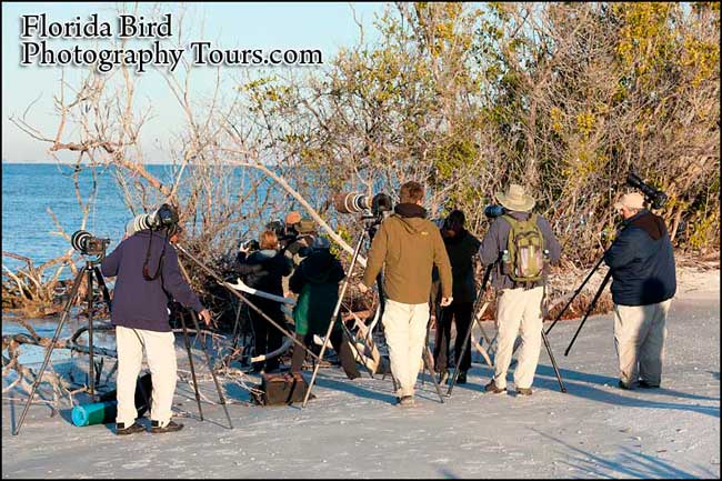 Florida Bird Photography Tour - (5 Days)